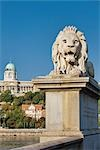 Chain Bridge Lion and Royal Palace in Background, Buda, Budapest, Hungary