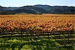 View of Vineyard in Autumn, Napa Valley, California, USA Stock Photo - Premium Rights-Managed, Artist: Damir Frkovic, Code: 700-03294965