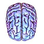 Human brain, artwork. Stock Photo - Premium Royalty-Free, Artist: Stellar Stock, Code: 679-03298753