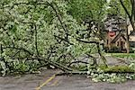 Fallen Tree on Road, Toronto, Ontario, Canada Stock Photo - Premium Royalty-Free, Artist: Mike Randolph, Code: 600-03333194