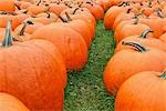 Pumpkins at Farm, Ontario, Canada Stock Photo - Premium Rights-Managed, Artist: Mike Randolph, Code: 700-03333185