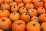 Pumpkins at a Farm in Ontario, Canada Stock Photo - Premium Royalty-Free, Artist: Mike Randolph, Code: 600-03333202