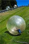 Zorb Rolling Down Hill, Rotorua, North Island, New Zealand Stock Photo - Premium Rights-Managed, Artist: R. Ian Lloyd, Code: 700-03333616
