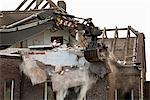 Detail of a house being demolished Stock Photo - Premium Royalty-Free, Artist: Derek Shapton, Code: 653-03334599