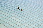 China,Beijing,Beijing Capital Airport. Workers on top of the new Terminal 3 building opened February 2008,second largest building in the world. Stock Photo - Premium Rights-Managed, Artist: AWL Images, Code: 862-03351610