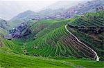 China,Guangxi Province,Longsheng Dragon's Backbone Rice Terraces,near Guilin Stock Photo - Premium Rights-Managed, Artist: AWL Images, Code: 862-03351786