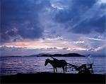 Dawn at Lake Ziway,Central Ethiopia,with the silhouette of a horse-drawn buggy.Horse-drawn buggies are widely used as taxis in the Ethiopian Highlands and in the Rift Valley south of Addis Abeda. Abyssinian horses and ponies are renowned for their stamina. Stock Photo - Premium Rights-Managed, Artist: AWL Images, Code: 862-03353985