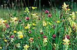 Wild flower meadow Stock Photo - Premium Rights-Managed, Artist: AWL Images, Code: 862-03354288
