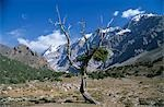 A wind blasted tree high in the Sarykhodan Valley which runs beneath the sheer rock faces of the Fann Mountains . Stock Photo - Premium Rights-Managed, Artist: AWL Images, Code: 862-03354981
