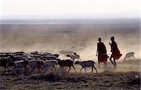 In the early morning,a Maasai herdsboy and his sister drive their family's flock of sheep across the friable,dusty plains near Malambo in northern Tanzania. Stock Photo - Premium Rights-Managednull, Code: 862-03355134