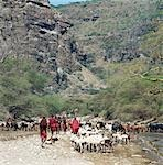 Maasai livestock watering at the seasonal Sanjan River,which rises in the Gol Mountains of northern Tanzania. Stock Photo - Premium Rights-Managed, Artist: AWL Images, Code: 862-03355148