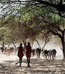 Two Maasai warriors,spears on their shoulders,leave the friable dusty banks of the Sanjan River after watering their cattle. Stock Photo - Premium Rights-Managed, Artist: AWL Images, Code: 862-03355149