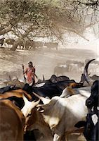 A Maasai warrior drives his family's cattle to the Sanjan River in northern Tanzania Stock Photo - Premium Rights-Managednull, Code: 862-03355150