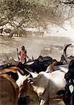 A Maasai warrior drives his family's cattle to the Sanjan River in northern Tanzania Stock Photo - Premium Rights-Managed, Artist: AWL Images, Code: 862-03355150