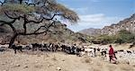 Maasai pastoralists water their livestock at the seasonal Sanjan River,which rises in the Gol Mountains of northern Tanzania. Stock Photo - Premium Rights-Managed, Artist: AWL Images, Code: 862-03355162