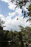 Person Zip Lining, Tulum, Mexico Stock Photo - Premium Rights-Managed, Artist: Arian Camilleri, Code: 700-03355679