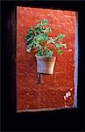 Detail of a geranium pot through a window. Stock Photo - Premium Rights-Managed, Artist: AWL Images, Code: 862-03360415