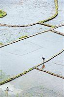 philippine terrace farming - Philippines,Luzon Island,The Cordillera Mountains,Kalinga Province,Tulgao Village near Tinglayan. Elderly woman and local boy working in water filled rice terraces with fish traps. Stock Photo - Premium Rights-Managednull, Code: 862-03360809