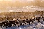 Russia,Kamchakta. Herding reindeer across the winter tundra,Palana,Kamchatka,Russian Far East Stock Photo - Premium Rights-Managed, Artist: AWL Images, Code: 862-03361073