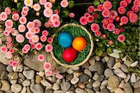 Easter Eggs and English Daisies Stock Photo - Premium Royalty-Freenull, Code: 600-03361639