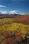 Scenic view of Mt.McKinley from Thorofare Pass with colorful Autumn tundra in the foreground, Denali National Park, Interior Alaska Stock Photo - Premium Rights-Managed, Artist: AlaskaStock, Code: 854-03362507
