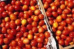 Boxes of Tomatoes,Oxkutzcab Market,Yucatan Stock Photo - Premium Rights-Managed, Artist: AWL Images, Code: 862-03364394