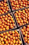 Boxes of Satsumas,Oxkutzcab Market,Yucatan Stock Photo - Premium Rights-Managed, Artist: AWL Images, Code: 862-03364395