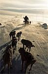 Dog team heading into wind blown snow on frozen hill in the Arctic Circle,Gargia,Northern Norway Stock Photo - Premium Rights-Managed, Artist: AWL Images, Code: 862-03365548