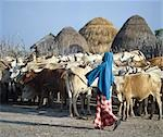A young Galla herdsboy with his family's cattle outside their homestead. Stock Photo - Premium Rights-Managed, Artist: AWL Images, Code: 862-03366185