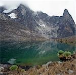 Hut Tarn lies at an altitude of 14,800 feet,close to the peaks of Mount Kenya (17,058 feet). The plants in the foreground are giant groundsels or tree senecios (Senecio johnstonii ssp battiscombei) and just visible on the right is a lobelia (Lobelia telekii) . Both are plant species displaying afro-montane gigantism that flourish above 10,000 feet. Stock Photo - Premium Rights-Managed, Artist: AWL Images, Code: 862-03366227