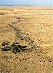 An aerial photograph of the wildebeest migration in Masai Mara. Up to 1.5 million wildebeest join the migration from Serengeti,Tanzania,to the Mara and back each year. Stock Photo - Premium Rights-Managed, Artist: AWL Images, Code: 862-03366247
