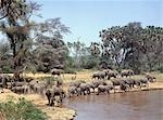 A herd of elephants drinks from the Uaso Nyiro River in the Samburu National Game Reserve. By taking regular mud or dust baths to keep away flies and other biting insects,elephants take on the soil colour of their own habitats. Stock Photo - Premium Rights-Managed, Artist: AWL Images, Code: 862-03366500