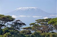 Kenya,Amboseli,Amboseli National Park. Majestic Mount Kilimanjaro towering above large acacia trees (Acacia tortilis) in Amboseli National Park. Stock Photo - Premium Rights-Managednull, Code: 862-03366750