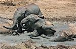Kenya,Tsavo East,Ithumba. Young elephants enjoy a mud bath at Ithumba where the David Sheldrick Wildlife Trust runs a very important unit for orphans. Stock Photo - Premium Rights-Managed, Artist: AWL Images, Code: 862-03366911