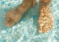 refraction - Feet underwater, close-up Stock Photo - Premium Royalty-Freenull, Code: 695-03374359