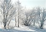 Finland, snow covered trees and ground Stock Photo - Premium Royalty-Free, Artist: Aflo Relax, Code: 695-03380843