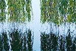 Weeping willow hanging over water with reflection in water Stock Photo - Premium Royalty-Free, Artist: Cusp and Flirt, Code: 695-03390595