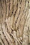 Close Up of Tree Bark Stock Photo - Premium Royalty-Free, Artist: Michael Eudenbach, Code: 600-03392444