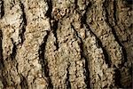 Tree Bark Detail Stock Photo - Premium Rights-Managed, Artist: Michael Eudenbach, Code: 700-03392462