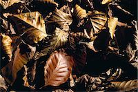 Dried leaves Stock Photo - Premium Royalty-Freenull, Code: 696-03394973