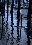 Reflection of tree trunks on wet sidewalk Stock Photo - Premium Royalty-Free, Artist: AWL Images, Code: 696-03396865