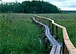 Finland, bridge through marshlands Stock Photo - Premium Royalty-Free, Artist: Masterfile, Code: 696-03397091