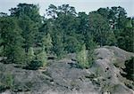 Sweden, rocky landscape and trees Stock Photo - Premium Royalty-Free, Artist: SuperStock, Code: 696-03397118