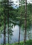 Finland, trees near lake shore Stock Photo - Premium Royalty-Freenull, Code: 696-03397143