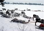 Finland, reindeers and sleds waiting on snow Stock Photo - Premium Royalty-Free, Code: 696-03397208