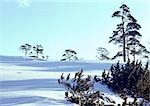 Sweden, sunny, snow-covered landscape Stock Photo - Premium Royalty-Free, Artist: Sheltered Images, Code: 696-03397217
