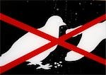 No feeding pigeons sign, close-up Stock Photo - Premium Royalty-Free, Artist: ableimages, Code: 696-03398744