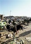 China, Xinjiang, Turpan, open air bazaar, donkey harnessed to cart Stock Photo - Premium Royalty-Free, Artist: Masterfile, Code: 696-03399289