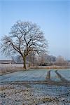 Farmland in Winter, Diepholz, Lower Saxony, Germany Stock Photo - Premium Rights-Managed, Artist: Elke Esser, Code: 700-03403751
