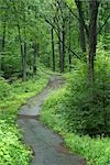 Curved Road Through Forest Stock Photo - Premium Royalty-Free, Artist: Michael Eudenbach, Code: 600-03405545